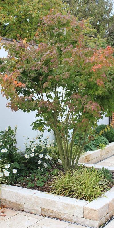 Mauern und Fächer-Ahorn strukturieren den Garten