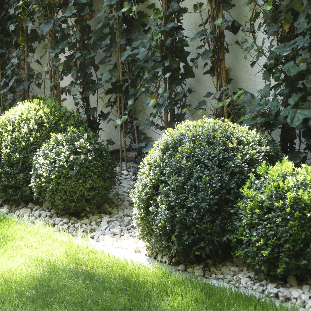 Immergrüne Bepflanzung mit Buchsbaum-Kugeln und Efeu