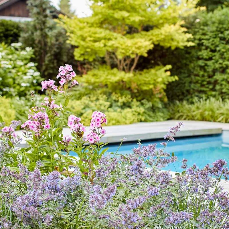 Flammenblume und Katzenminze trennen den Poolbereich von der Terrasse.