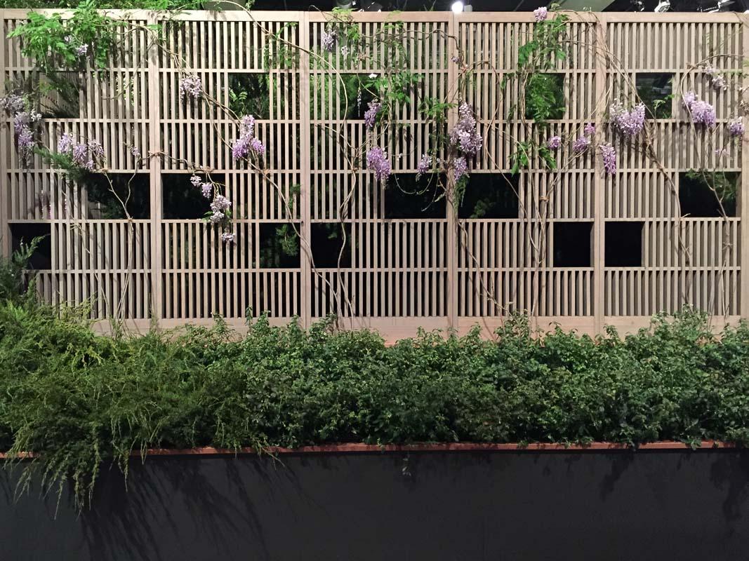 Sichtschutzwand des Showgartens von Enzo Enea mit einer neckischen Glyzinie.