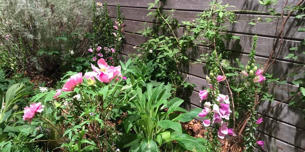 Naturnahe Pflanzungen waren zu sehen, vereinzelt auch mit romantischer Blütenfülle im Cottage Garden Stil