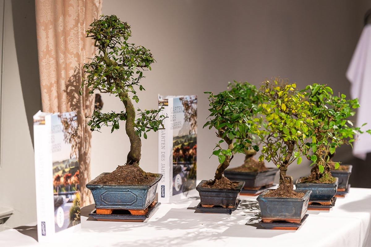 Die Preise: Bonsais. Gärten des Jahres 2020 auf Schloss Dyck in Jüchen