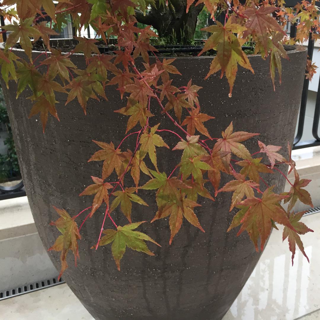 Das herbstlich gefärbte Laub harmoniert wundervoll mit dem Ton-Material.