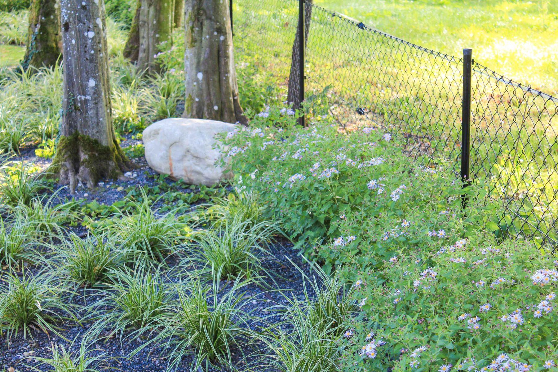 Immergrünes Ziergras als Unterpflanzung unter Bäumen