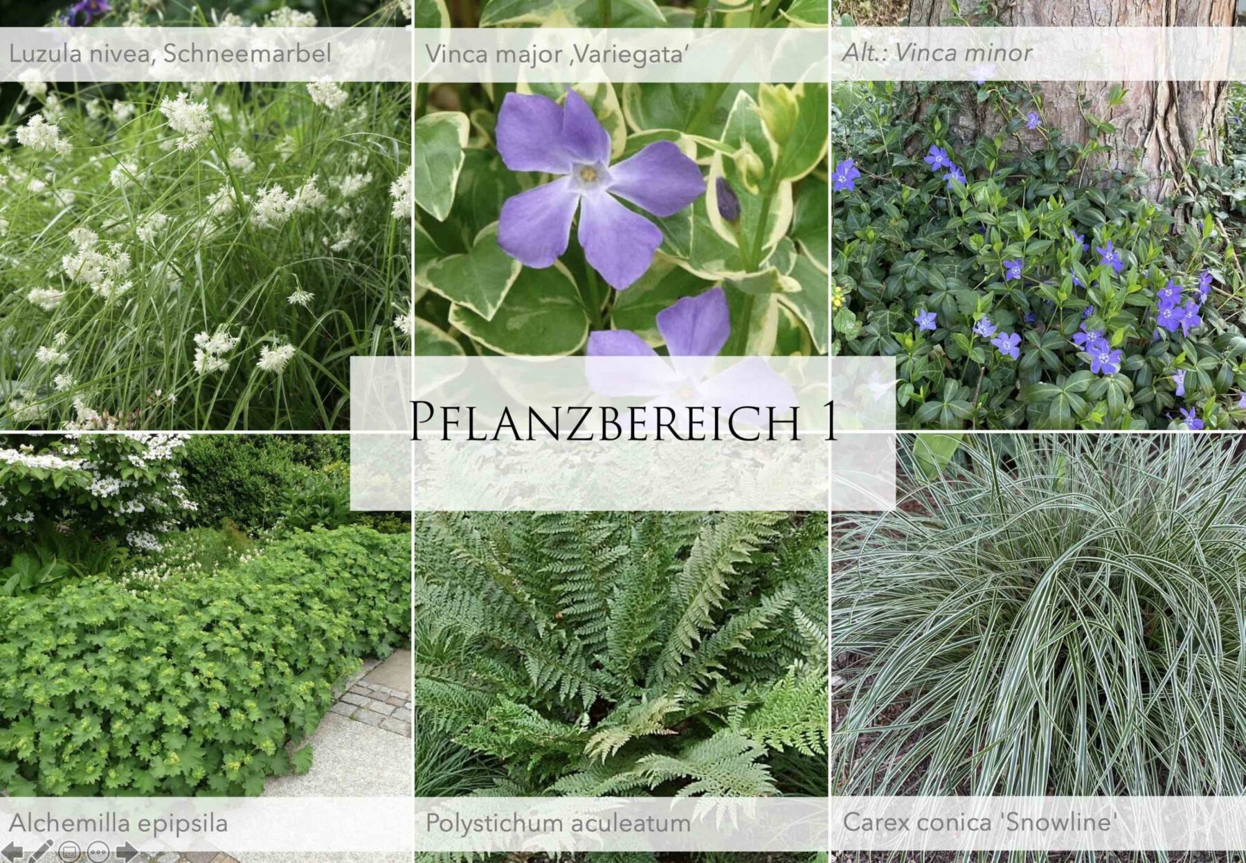 Pflanzplanung mit Grün, Violett und Weiß